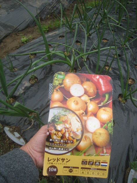 早春の収穫物いろいろ_e0121558_21501837.jpg