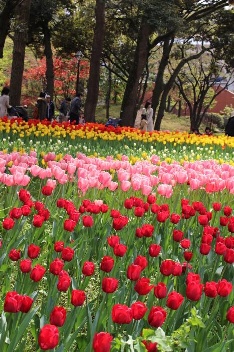 スプリング フェア 2015  @横浜公園_a0180279_16230438.jpg