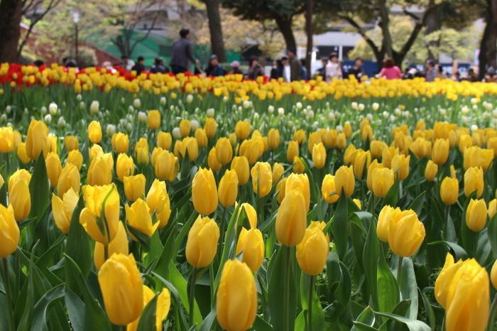 スプリング フェア 2015  @横浜公園_a0180279_16235239.jpg