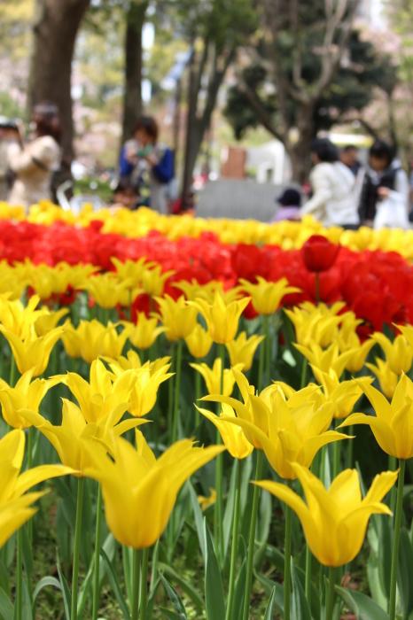 スプリング フェア 2015  @横浜公園_a0180279_16244437.jpg