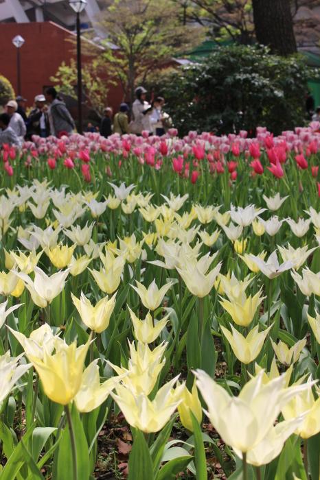 スプリング フェア 2015  @横浜公園_a0180279_16253771.jpg