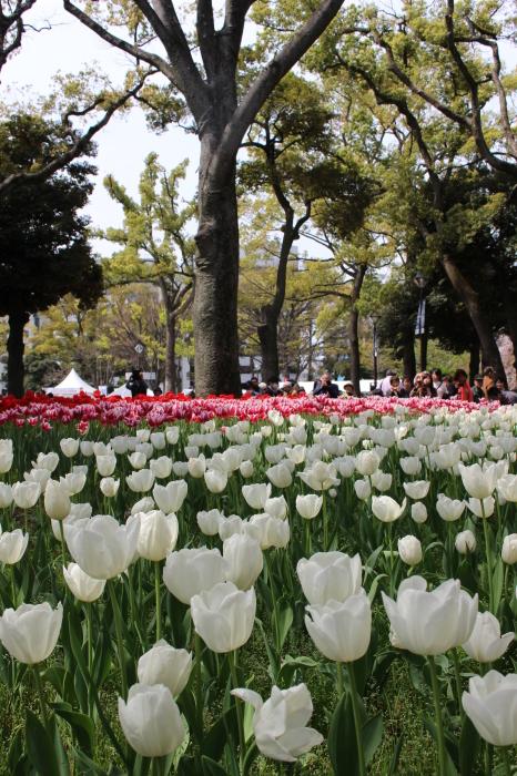 スプリング フェア 2015  @横浜公園_a0180279_16305089.jpg