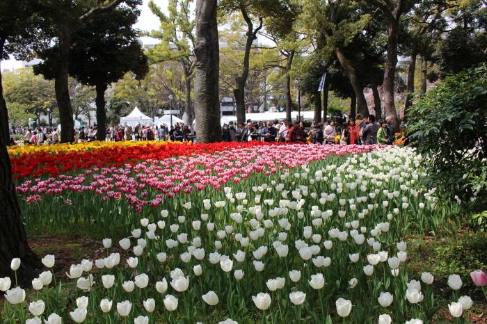 スプリング フェア 2015  @横浜公園_a0180279_16320126.jpg
