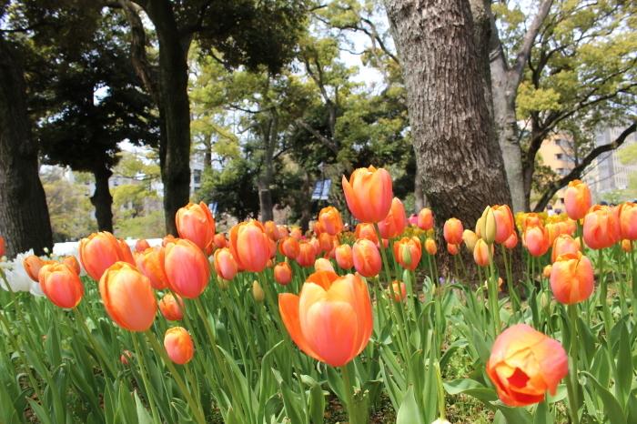 スプリング フェア 2015  @横浜公園_a0180279_16331218.jpg