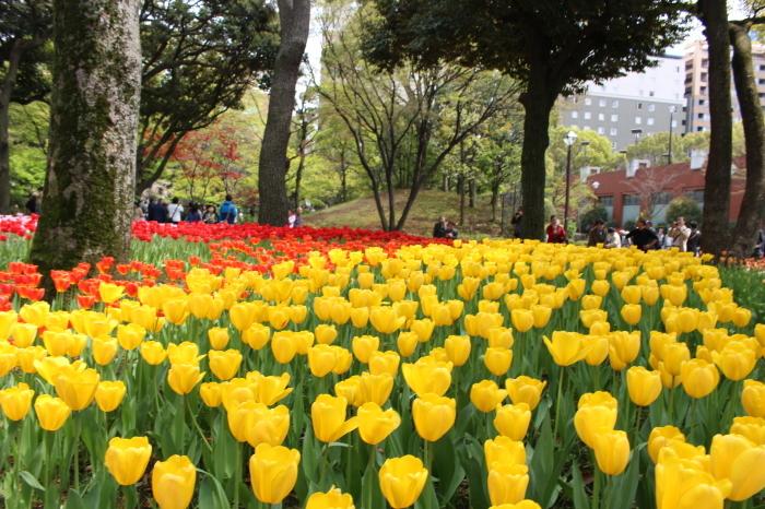 スプリング フェア 2015  @横浜公園_a0180279_16350686.jpg
