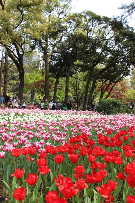 スプリング フェア 2015  @横浜公園_a0180279_16361204.jpg