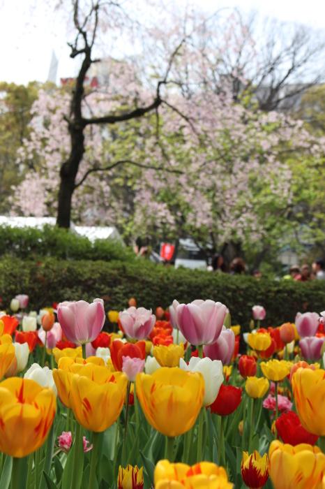 スプリング フェア 2015  @横浜公園_a0180279_16441042.jpg