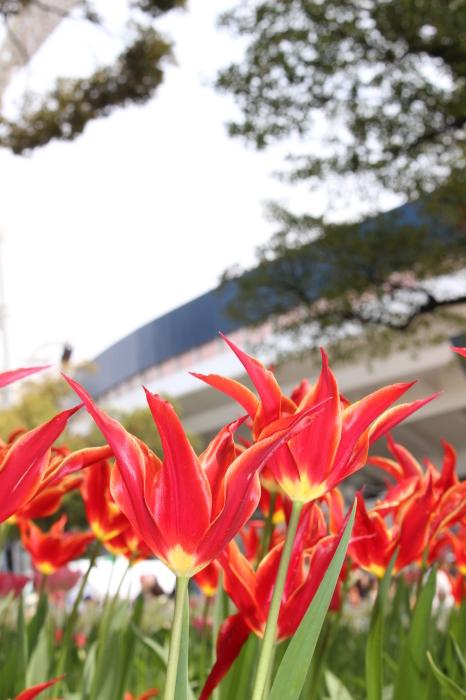 スプリング フェア 2015  @横浜公園_a0180279_16522694.jpg