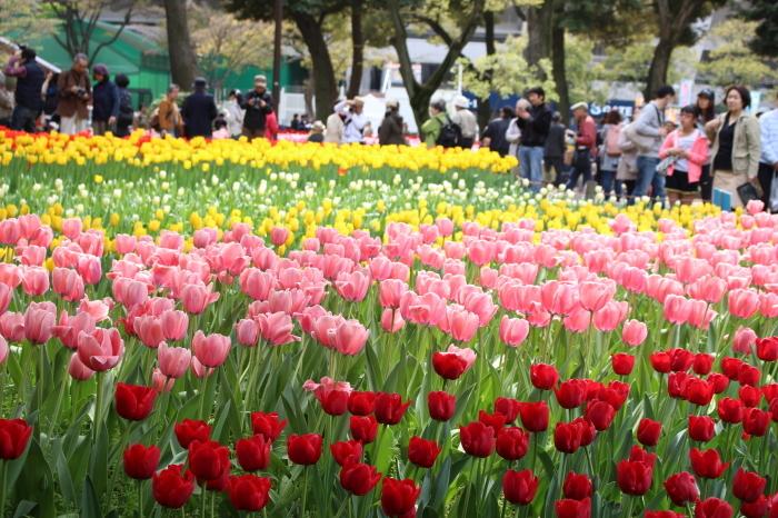 スプリング フェア 2015  @横浜公園_a0180279_16535092.jpg