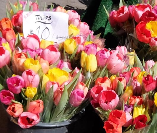 春がやってきたニューヨークの青空市場、Green Market_b0007805_22365592.jpg