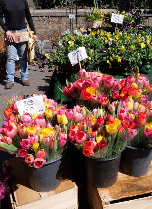 春がやってきたニューヨークの青空市場、Green Market_b0007805_22371747.jpg
