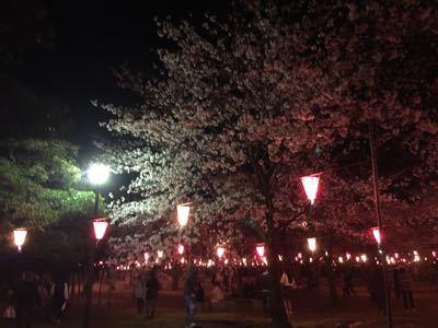 桜_c0239414_16542466.jpg