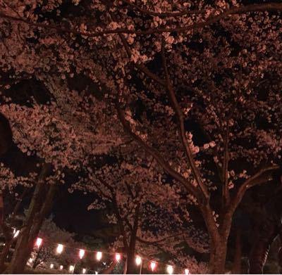 桜_c0239414_16592527.jpg