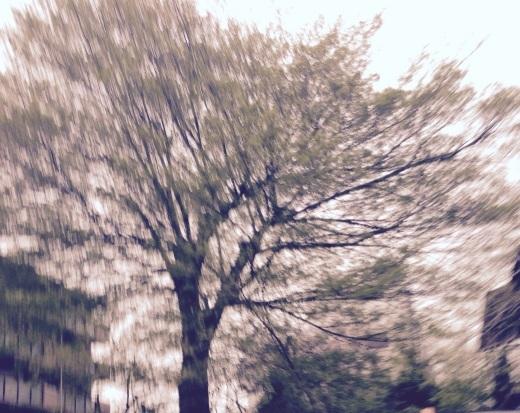 トトロの木。_f0319325_22221391.jpg