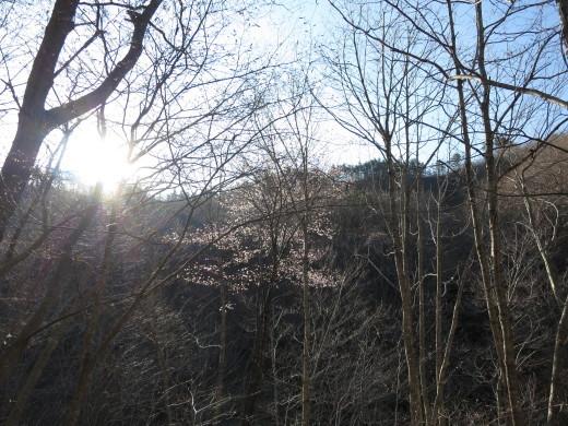 今日の通勤路の車窓から ~早咲き山桜~_b0206037_07481644.jpg