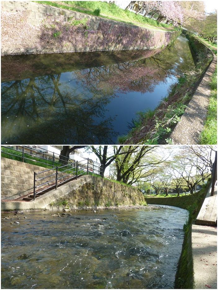 引地川はサクラ色から新緑に☆_c0152341_1314084.jpg