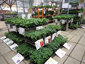 家庭菜園が楽しい季節!_c0141652_11353478.jpg