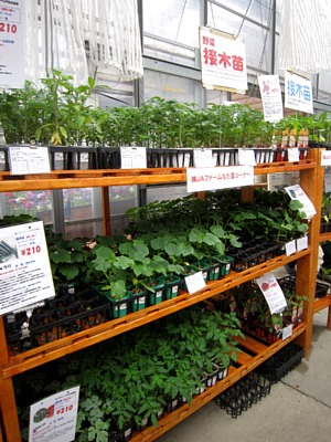 家庭菜園が楽しい季節!_c0141652_1136617.jpg