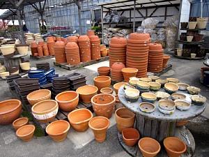 家庭菜園が楽しい季節!_c0141652_11431856.jpg