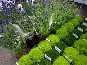 家庭菜園が楽しい季節!_c0141652_11445234.jpg
