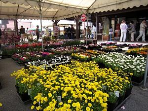 家庭菜園が楽しい季節!_c0141652_11453881.jpg