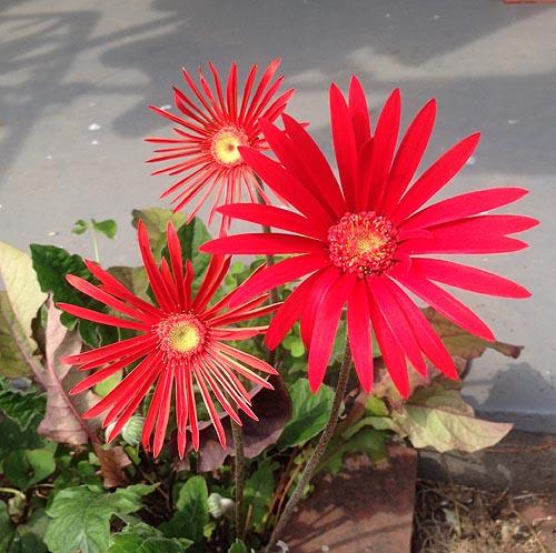 いま咲いているお花(一部)_e0026053_1421988.jpg