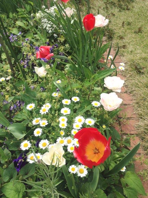 いま咲いているお花(一部)_e0026053_1432367.jpg