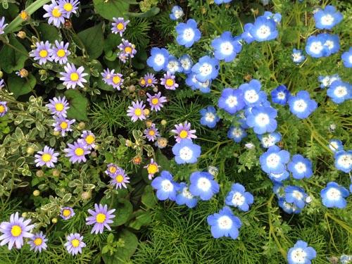 いま咲いているお花(一部)_e0026053_1435784.jpg