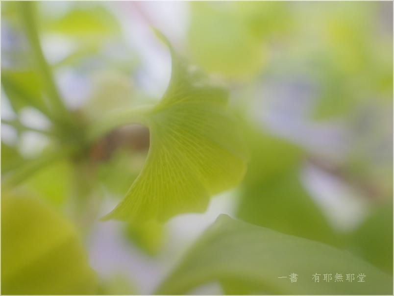 さくら色 から いちょうの子 (^^♪_a0157263_22461971.jpg