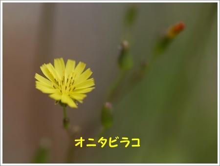 b0175688_21422558.jpg