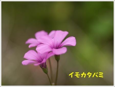 b0175688_21432233.jpg