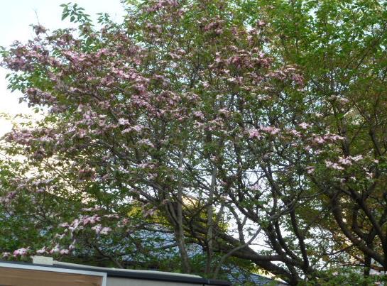 春2,3番?_f0166694_2241556.jpg