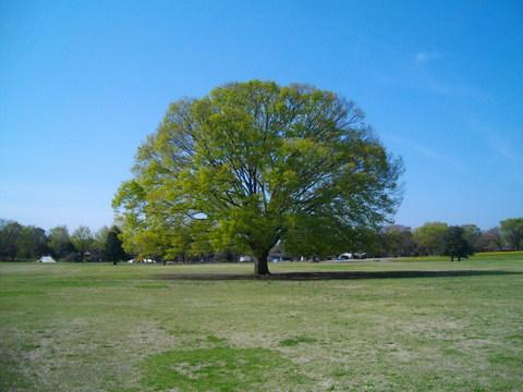 ようこそ、緑の世界へ_b0172896_16551892.jpg