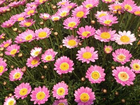 むらさき、きいろ、ピンクの花_e0289203_22134576.jpg