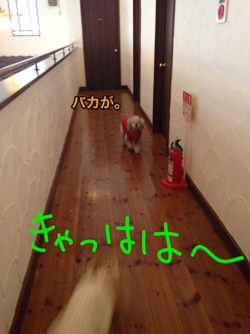 b0067012_023326.jpg