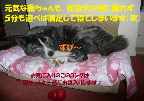 f0121712_5531541.jpg