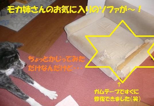 f0121712_5571135.jpg