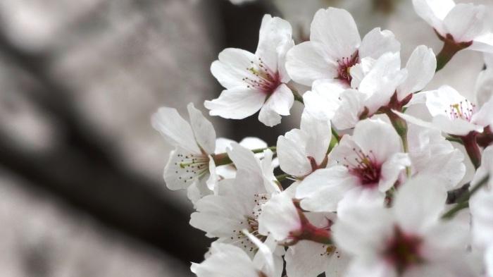春爛漫_b0290816_17453565.jpg