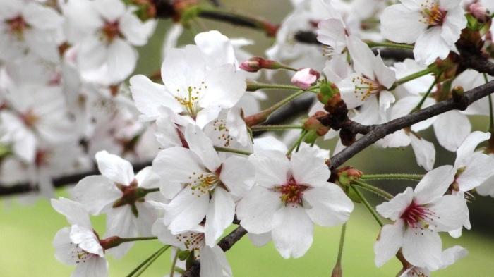 春爛漫_b0290816_17454480.jpg