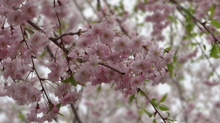 春爛漫_b0290816_17463076.jpg