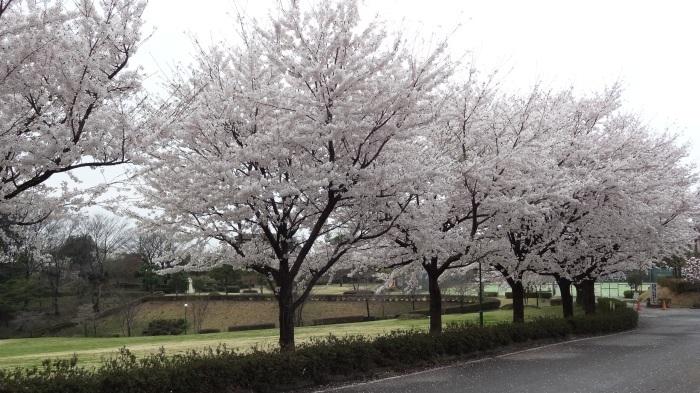 春爛漫_b0290816_17464659.jpg