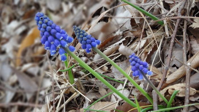 春爛漫_b0290816_17481819.jpg