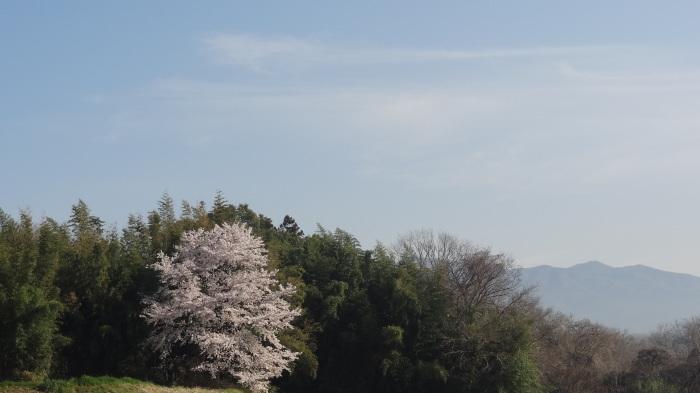 春爛漫_b0290816_17482731.jpg