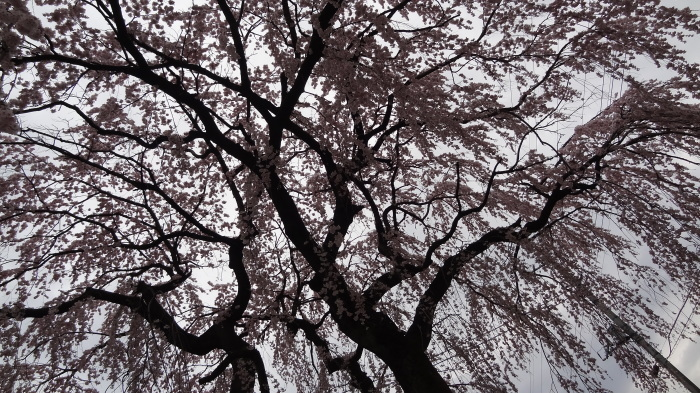 春爛漫_b0290816_17490261.jpg