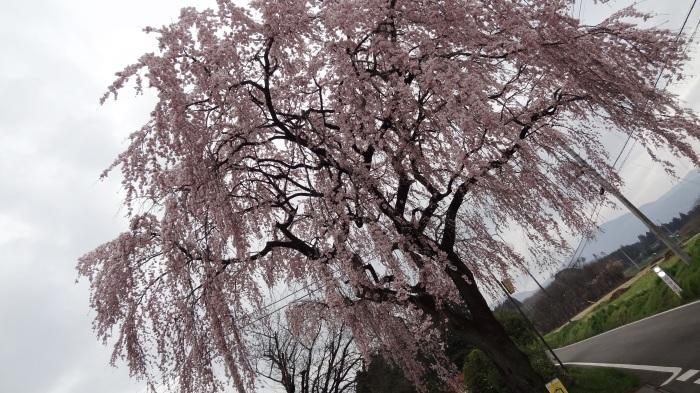 春爛漫_b0290816_17491205.jpg