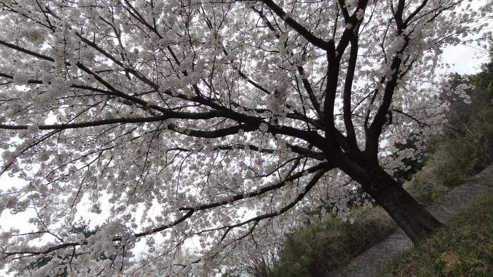 春爛漫_b0290816_17525844.jpg