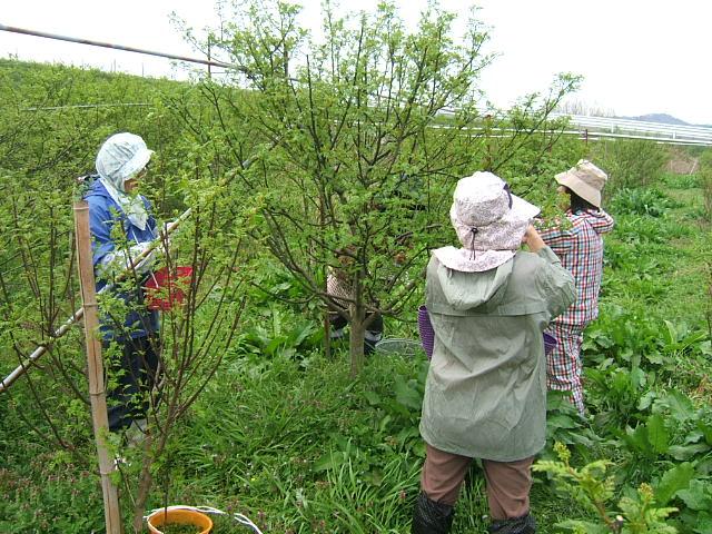 花山椒収穫_c0220321_16374026.jpg