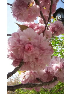 Beautiful~♪_f0126121_1432121.jpg