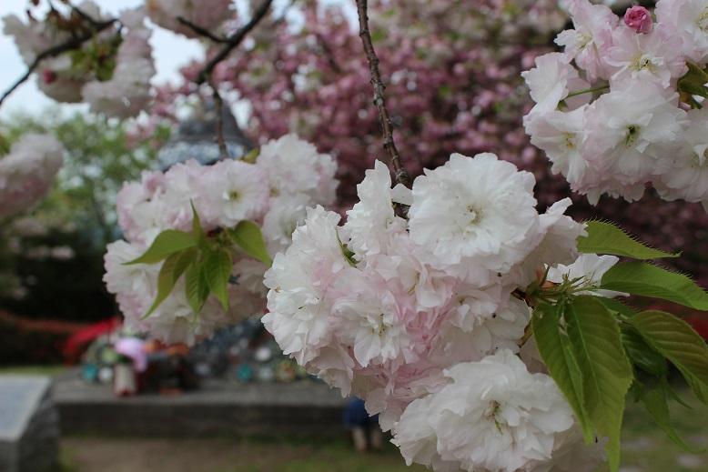"""4月16日(木) \""""大安吉日\""""_f0191324_0442995.jpg"""
