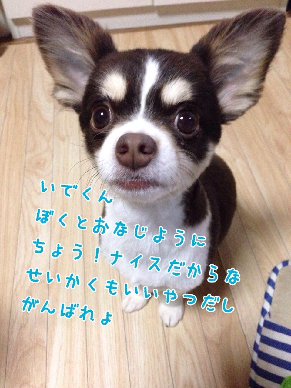 c0342841_16071243.jpg